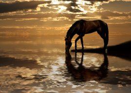 Konji i ljudi